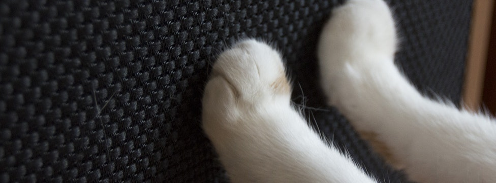 10 Ways To Stop A Cat From Scratching Your Furniture & Speakers