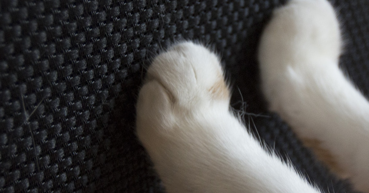 10 Ways To Stop A Cat From Scratching Your Furniture Klipsch